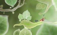 Botanicula | Ботаникула